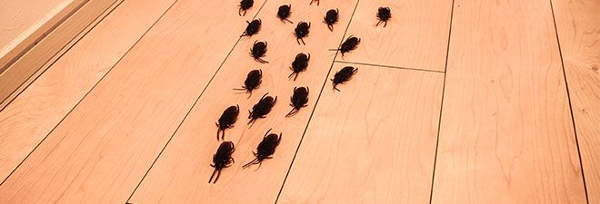Cockroaches inside a house